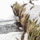 In the icy kingdom of white-throated dipper the koskikara lintu CRW_4748.jpg