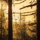 Golden morning glitter of frost CRW_4508.jpg