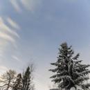 lumisia_kuusia_snowy_spruce_star_sky_tahtitaivas_CRW_0718.jpg