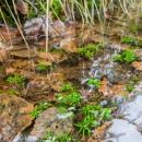 underwater_moss_vedenalainen_sammal_CRW_0207.jpg