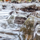 Frozen puddle CRW_4570.jpg