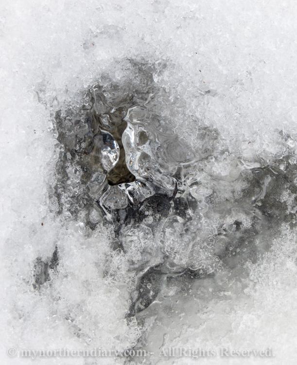 004012-120316-In-the-icy-kingdom-of-white-throated-dipper-the-koskikara-lintu-CRW_4752.jpg