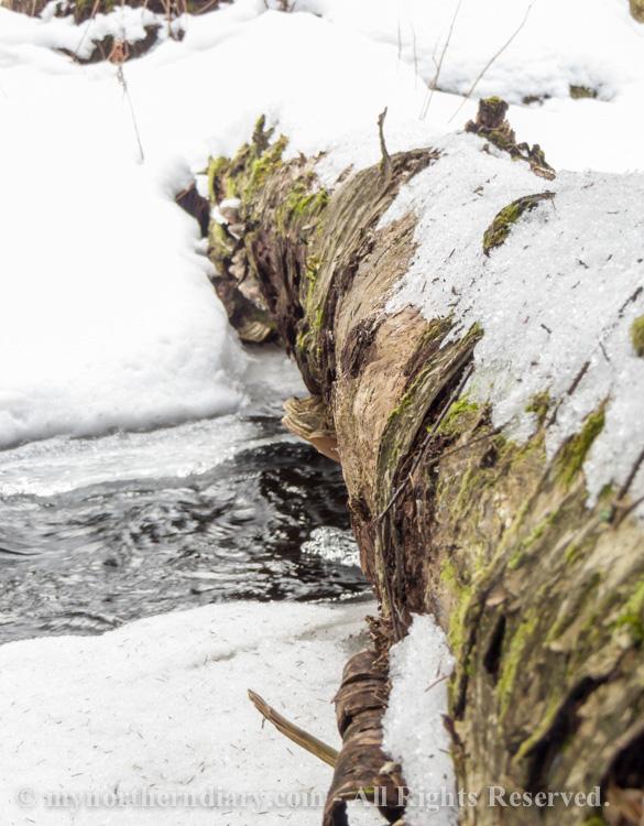 093812-120316-In-the-icy-kingdom-of-white-throated-dipper-the-koskikara-lintu-CRW_4748.jpg