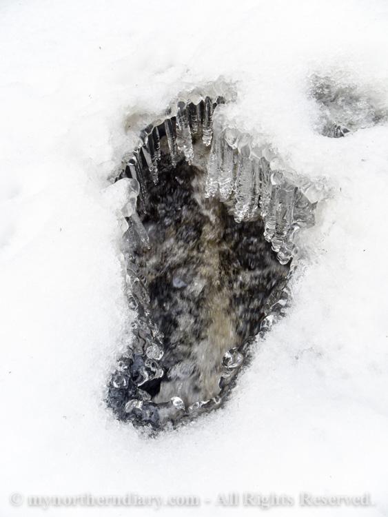 094012-120316-In-the-icy-kingdom-of-white-throated-dipper-the-koskikara-lintu-CRW_4753.jpg