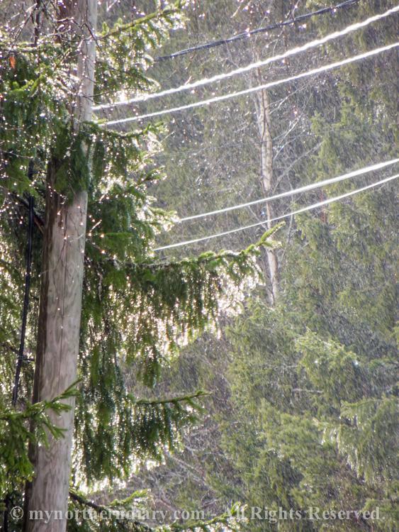 101318-190416-Shiny-spring-rain-in-countryside-CRW_4844.jpg