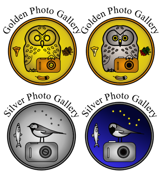 241214_GoldenOwlGallery_logo_for_MND-post_2