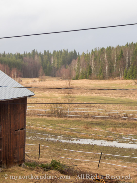 580918-190416-The-wet-fields-of-common-crane-the-kurki-lintu-CRW_4839.jpg