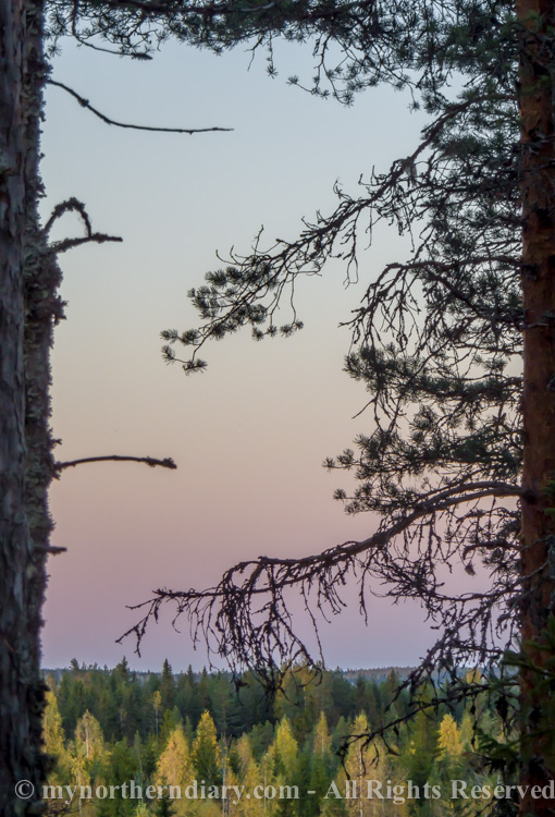 Earth's shadow over a boreal forest