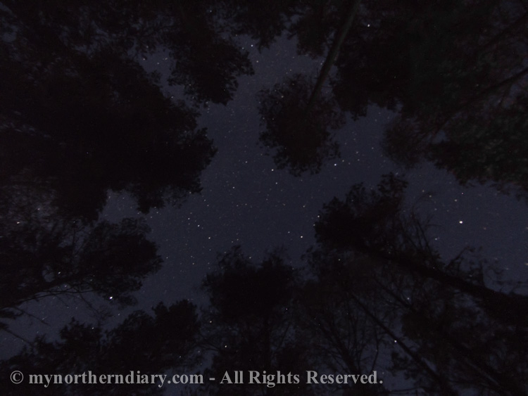Milky way over a boreal forest.