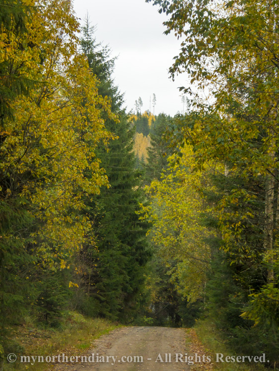 Autumnal Finnish landscapes