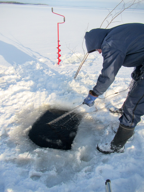 Catching-zander-by-nets-under-ice-IMG_3095.jpg