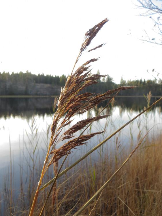 Cold-Finnish-lake