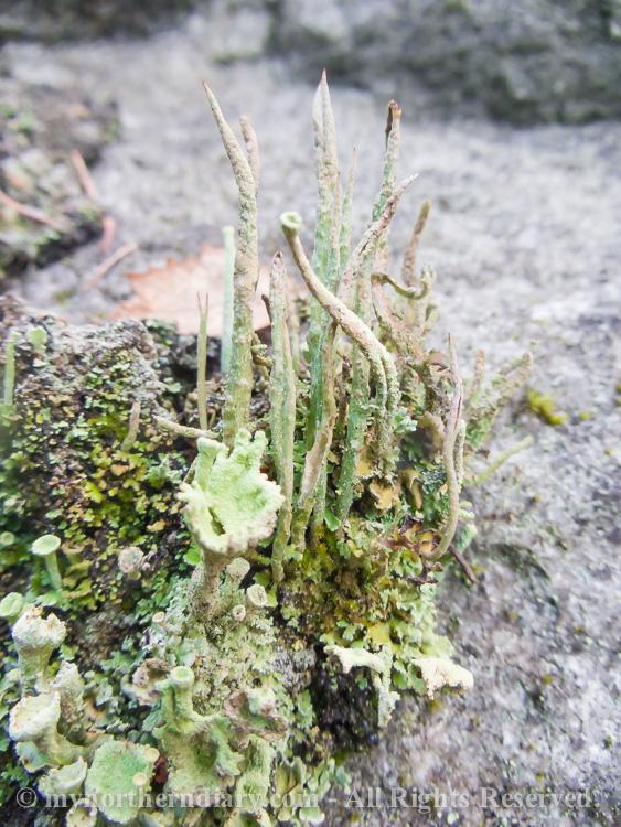 Colorfull-moss-and-lichen-CRW_4591.jpg