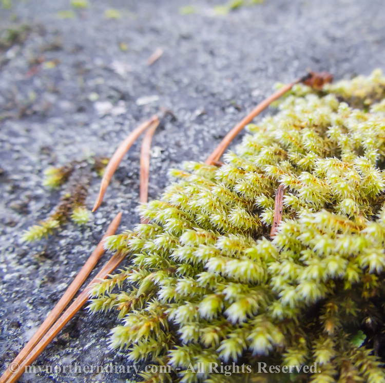 Colorfull-moss-and-lichen-CRW_4592.jpg
