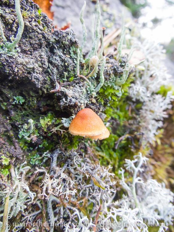 Colorfull-moss-and-lichen-CRW_4597.jpg