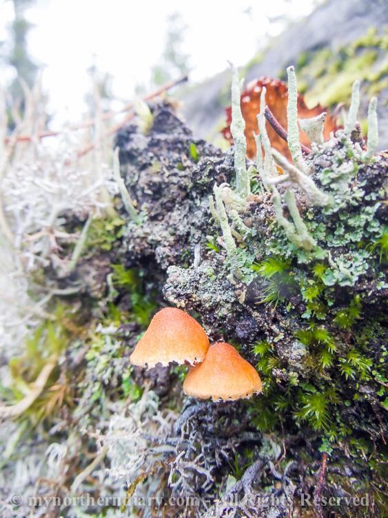 Colorfull-moss-and-lichen-CRW_4598.jpg