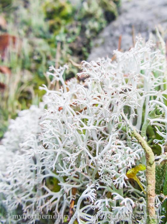 Colorfull-moss-and-lichen-CRW_4599.jpg