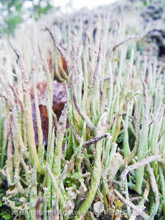 Colorfull-moss-and-lichen-CRW_4600.jpg