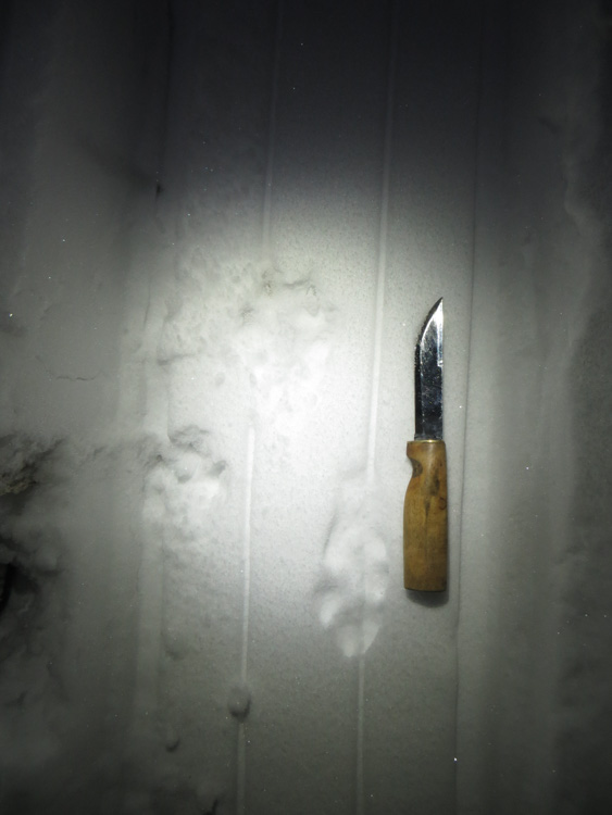 Dragging-heavy-sledge-to-make-snow-trails-for-hare-hunting-IMG_4648.jpg