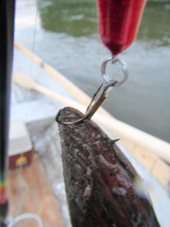 Duck-mussel-caught-with-Falkfish-Spo_ket-IMG_0754.jpg