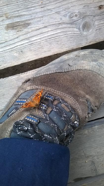 Fix-plastering-defects-in-chimneys-under-supervision-of-small-tortoiseshell-butterfly-or-nokkosperhonen-WP_20160724_019.jpg