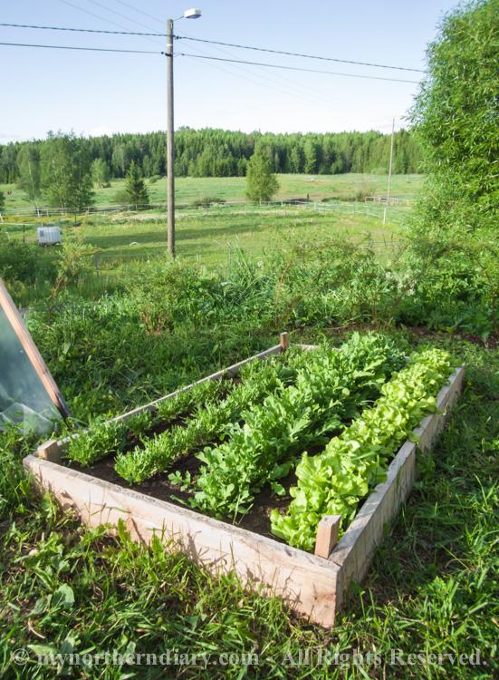 Fresh-green-plants-tomatoes-and-herbs-CRW_0601.jpg