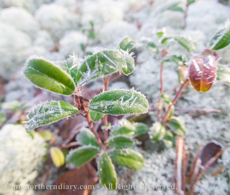 Frozen-cranberries-CRW_4528.jpg