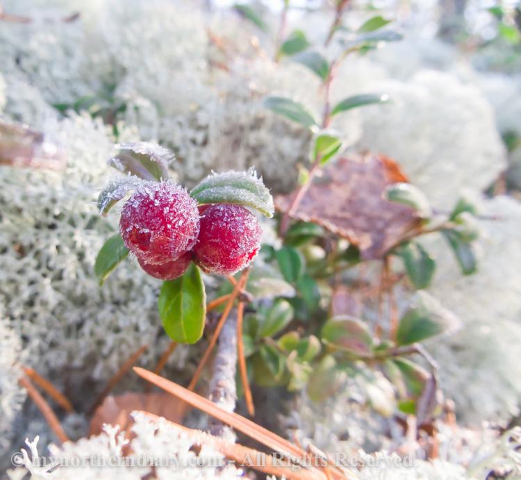 Frozen-cranberries-CRW_4529.jpg