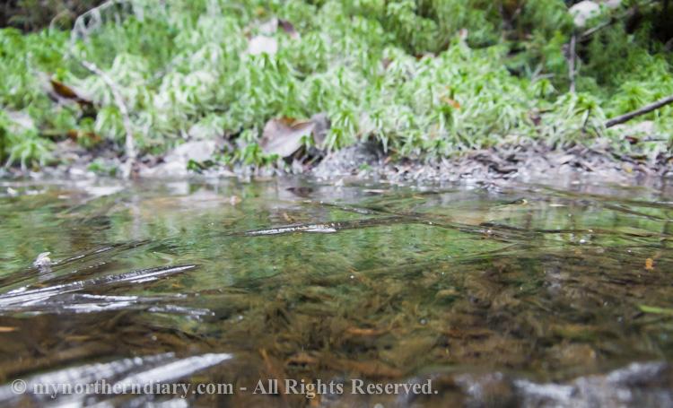 Frozen-puddle-CRW_4515.jpg
