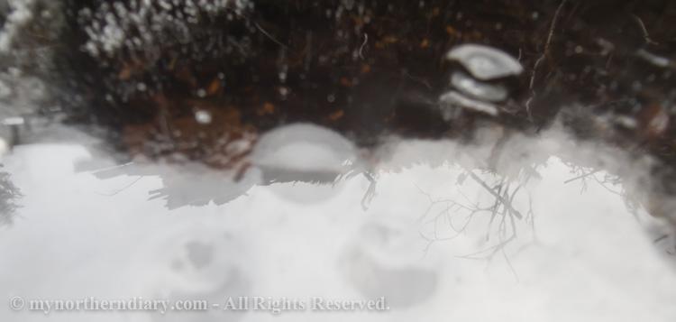 Frozen-puddle-CRW_4554.jpg