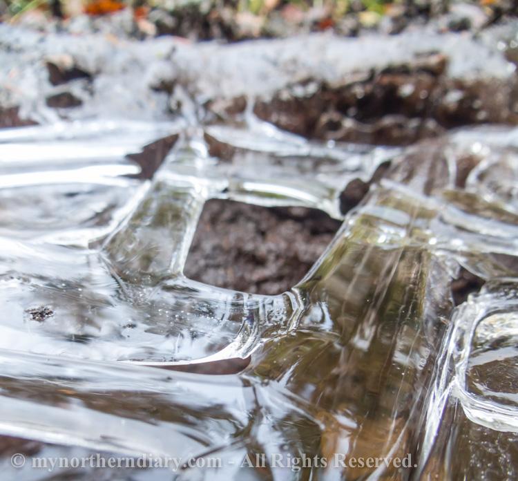 Frozen-puddle-CRW_4570.jpg