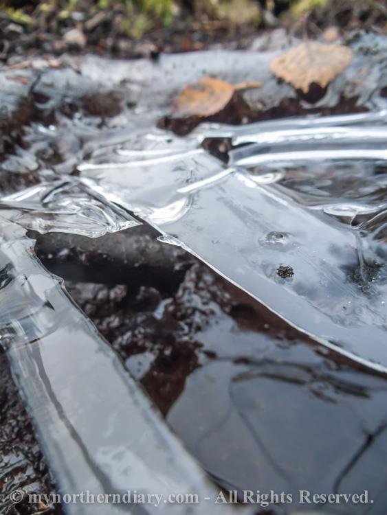 Frozen-puddle-CRW_4571.jpg