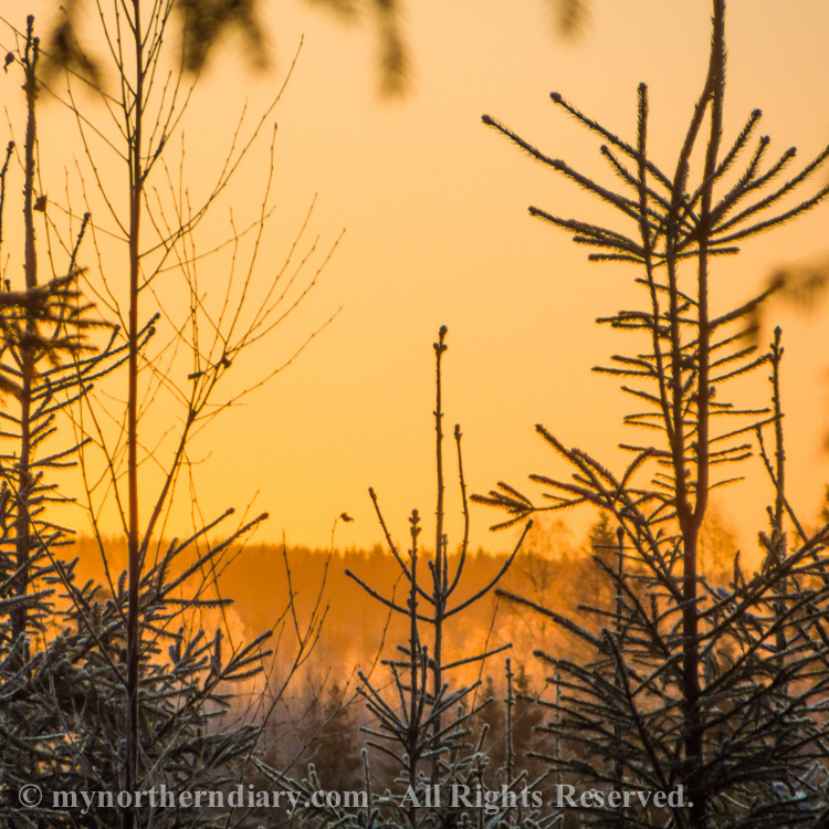 Golden-morning-glitter-of-frost-CRW_4504.jpg
