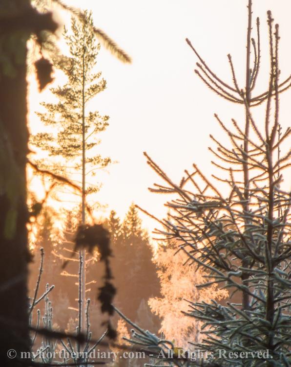 Golden-morning-glitter-of-frost-CRW_4505.jpg