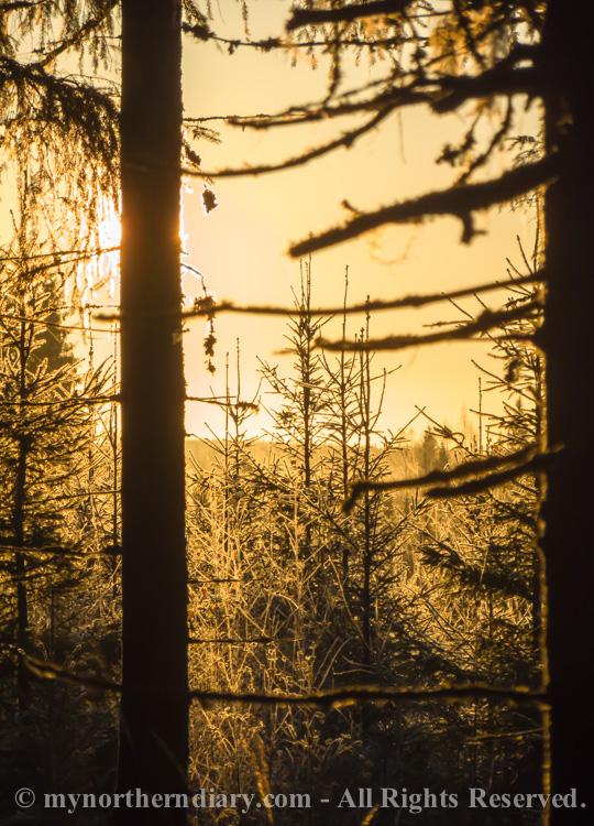 Golden-morning-glitter-of-frost-CRW_4508.jpg