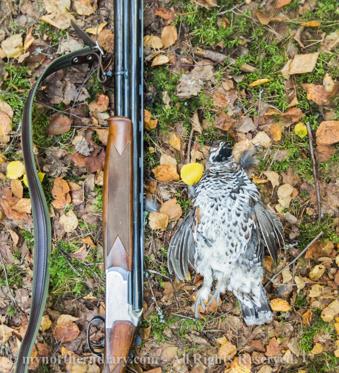 Hazel-grouse-and-shotgun-CRW_4236.jpg