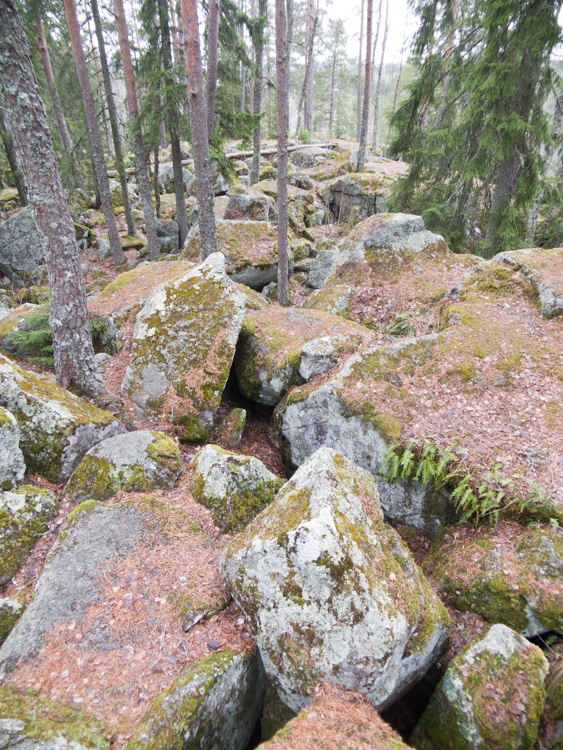 Hiking-trip-in-boreal-forest-during-spring-CRW_4823.jpg