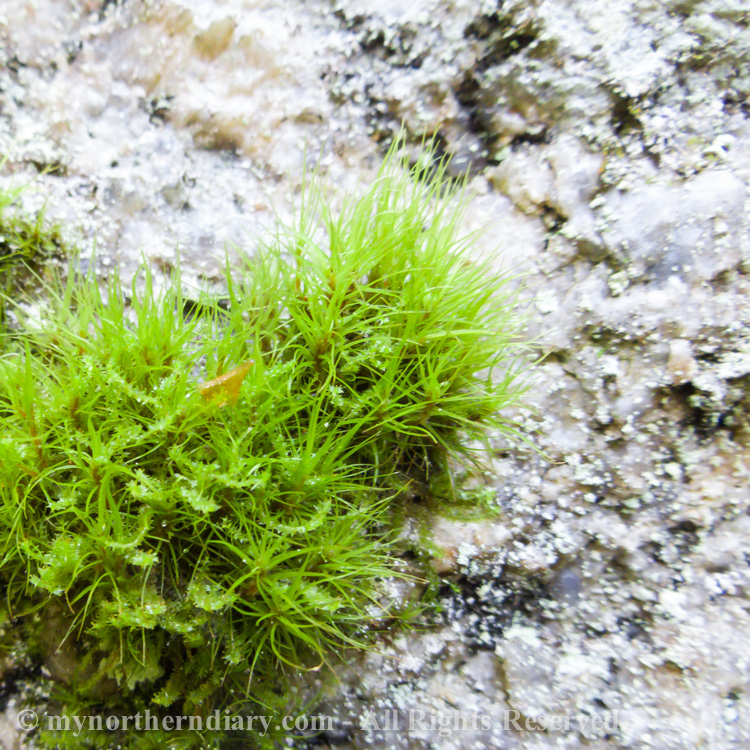 Macrophoto-of-moss-on-rock-CRW_4391.jpg