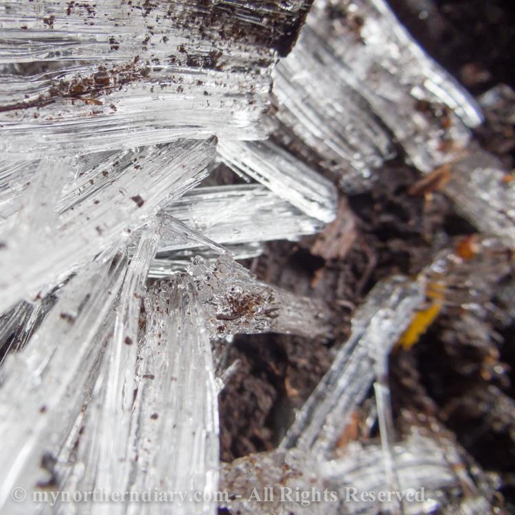 Pillar-like-ice-crystals-in-frozen-ground-CRW_4563.jpg