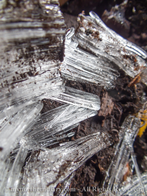 Pillar-like-ice-crystals-in-frozen-ground-CRW_4564.jpg