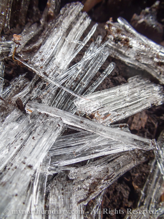 Pillar-like-ice-crystals-in-frozen-ground-CRW_4565.jpg