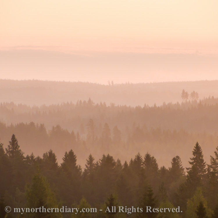 Pink-morning-light-on-Finnish-forest-CRW_4277.jpg