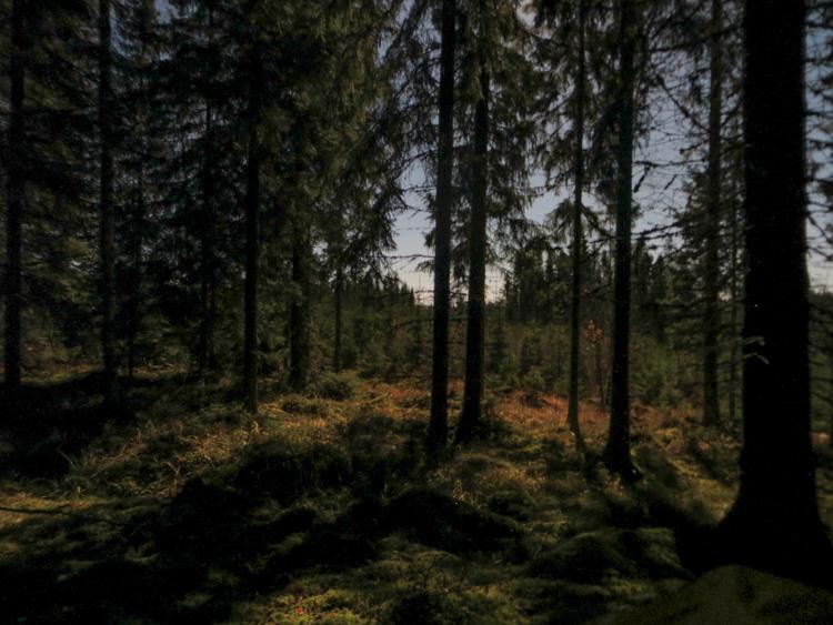 Sleeping-in-frost-with-multi-log-rakovalkea