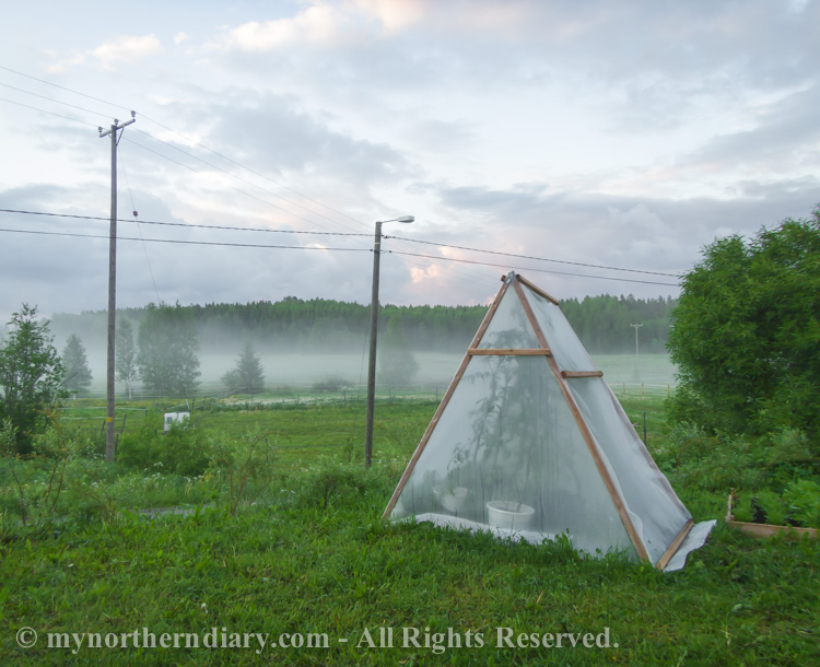 Small-green-house-full-of-tomatoes-next-to-misty-field-CRW_0644.jpg