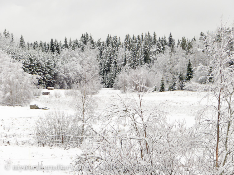 Snowy-and-white-countryside-CRW_4627.jpg