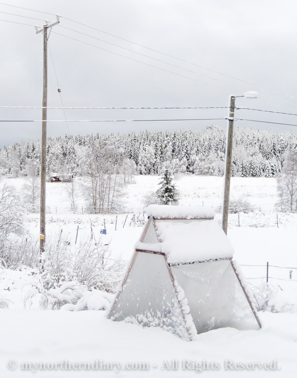 Snowy-and-white-countryside-CRW_4637.jpg