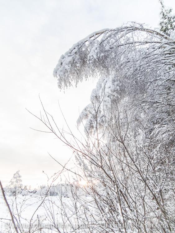 Snowy-and-white-countryside-CRW_4643.jpg