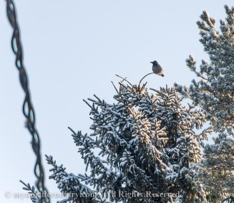 Snowy-and-white-countryside-CRW_4705.jpg