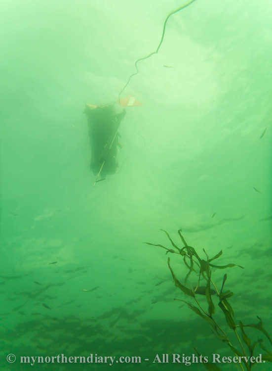 Spearfishing-float-with-harpoon-CRW_2530.jpg