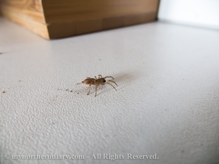Spider-bro-in-kitchen-CRW_1802.jpg